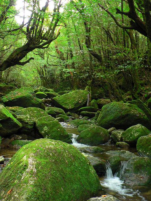 Yakushima Japan  city photos gallery : Yakushima Kagoshima Japan