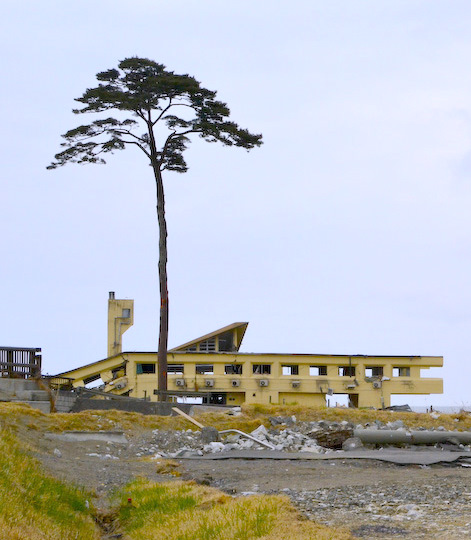 Collapsed_Rikuzentakata_Youth_Hostel_and_a_Pine_Tree_of_Hope