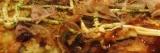 January Bonus Recipe: Ebi Okonomiyaki(エビお好み焼き)