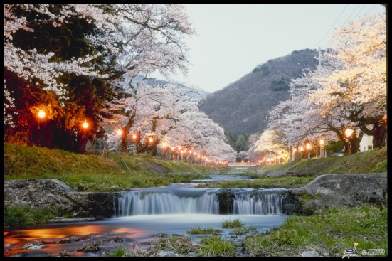 Cherry Blossoms along Kannonji River, Fukushima ©JNTO