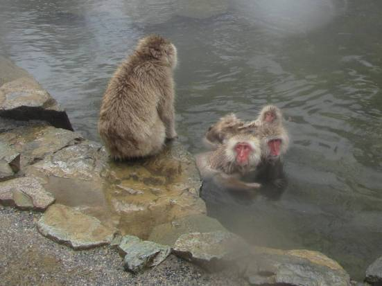 Snow Monkeys, Jigokudani, Nagano, March 2011