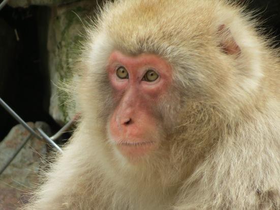 Marvellous monkey