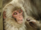 Postcard from Japan: MonkeyMagic