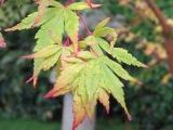 Autumn in KyotoGarden