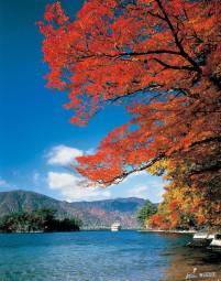 Autumn Leaves of Lake Towada-ko ©Aomori Prefecture/©JNTO