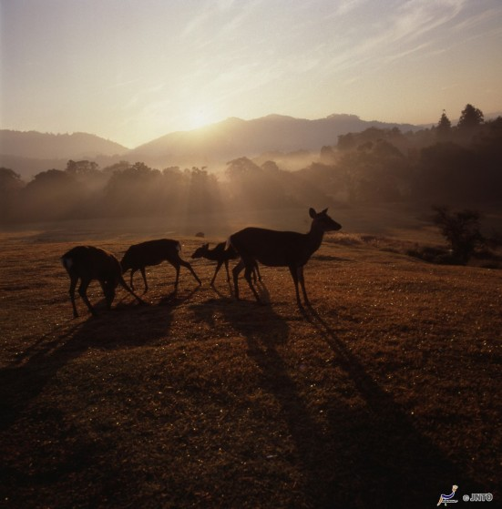 Deer in Nara Park ©NARA TOURISM FEDERATION/©JNTO