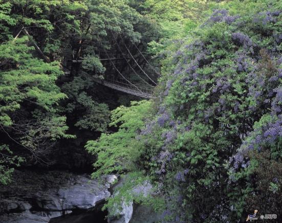 Kazurabashi ©Tokushima Prefecture/©JNTO