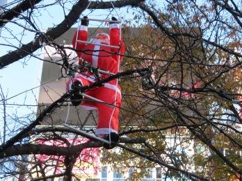 Santas in trees in Shibuya
