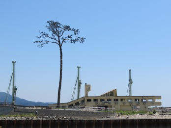 The Miracle Pine Tree